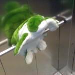 Fehler bei der Haustierhaltung: Schildkröten