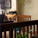 Kätzchen verschätzt sich beim Sprung