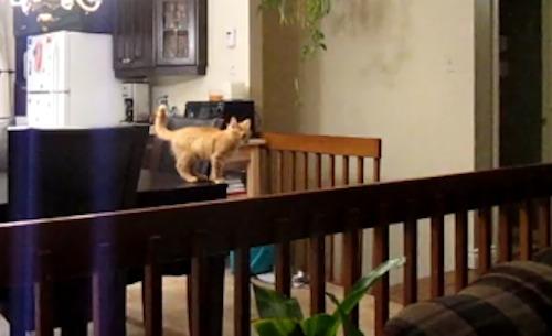 Katze beim Sprung