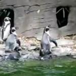 Was ist besser als Katzen-Content? Pinguin-Content!