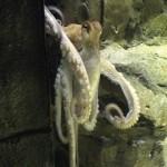 Kraken-Orakel, Esoterik-Mist und das Wetter