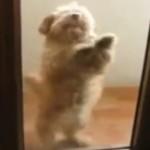 Der Salsa Hund