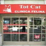Katzen-Euthanasie in Barcelona