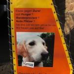 Auch Pfälzer essen Hunde