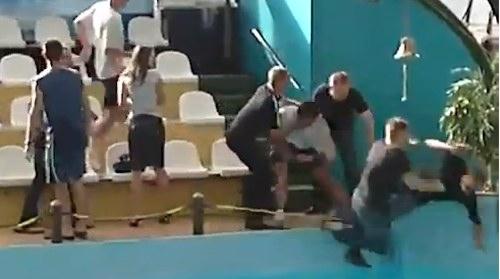 Prügelei im Delphinarium in Russland