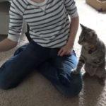 Katze kämpft mit Fön