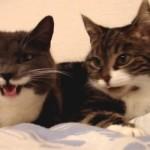 Die sprechenden Katzen