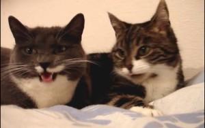 sprechende katzen