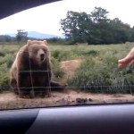 """Höflicher Bär winkt """"auf wiedersehen""""!"""