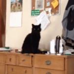 Katzen sind Arschlöcher: Der Beweis