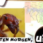 Interessante Fakten über Ameisen