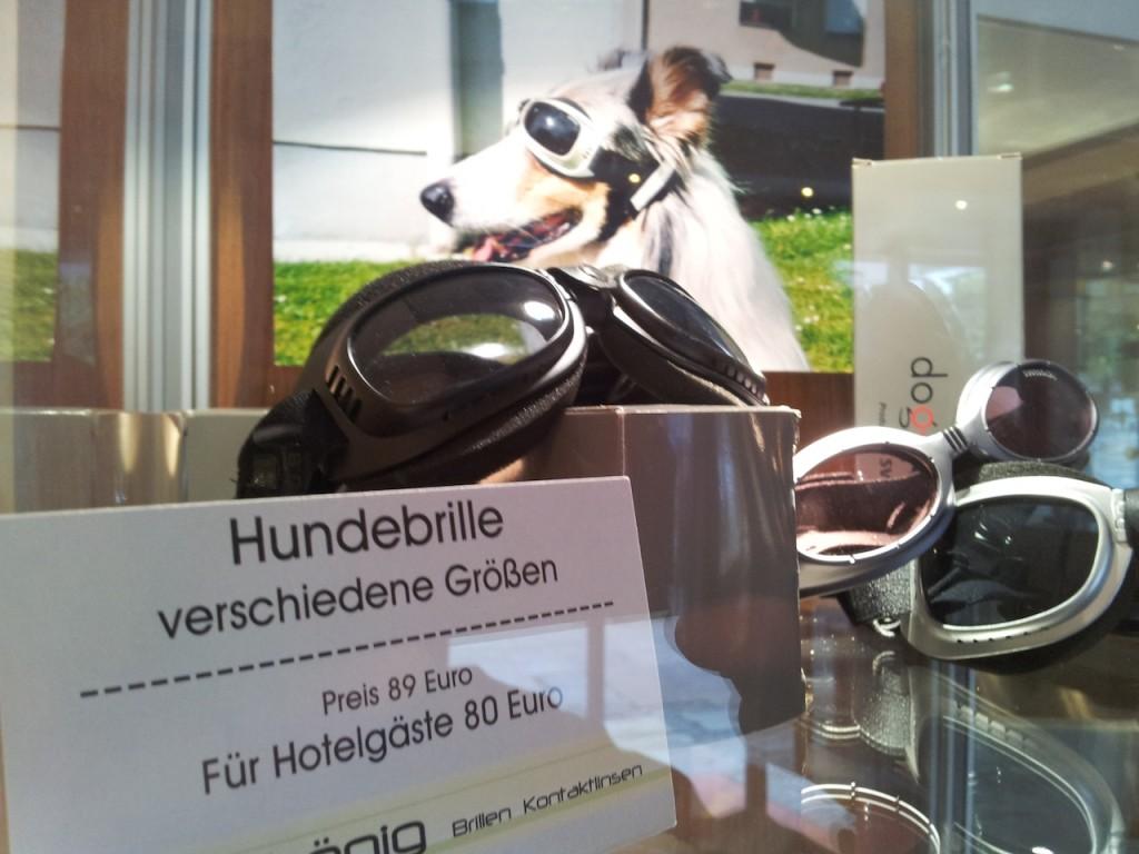 hundebrillen - Sonnenbrille für den Hund