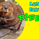 Interessante Fakten über Biber