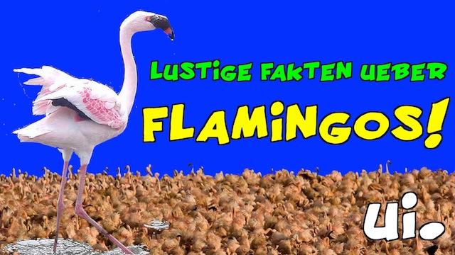lustige fakten ber flamingos ui der blog. Black Bedroom Furniture Sets. Home Design Ideas