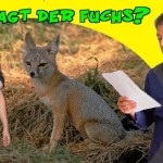 What does the Fox say auf deutsch? Lyrische Lesung!
