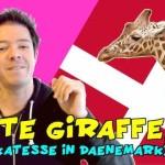 Giraffen töten in Dänemark!