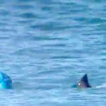 Surfer wird fast von Haien angegriffen