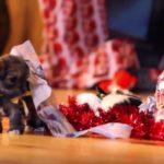 Die 10 besten Weihnachtsvideos 2017