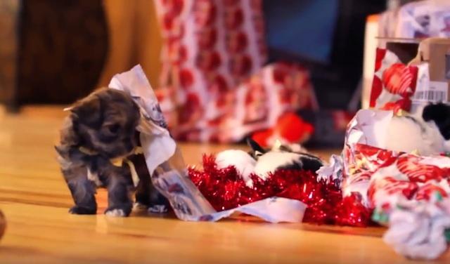 Die 10 besten Weihnachzsvideos